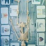 Le Squelette-35
